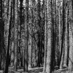 bosco_moreno